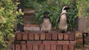 Penguin Town: 1×7